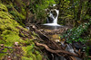 Waterfall - Overland Track, Cradle Mountain (Nature's Image Photography) Tags: cradlemountain overlandtrack waterfall rainforest tasmania wilderness