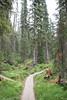 20170903-DSC_0125.jpg (bengartenstein) Tags: canada banff glacier nps glaciernps montana canada150 mountains moraine morainelake manyglacier lakelouise hiking fairmont