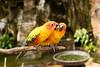 Family quarrel (good.fisherman) Tags: bird park parrot zoo animal family relationship daylight tropical color quarrel