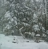 2018_0313More-March-Snow0002 (maineman152 (Lou)) Tags: westpond snow marchsnow snowstorm northeaster noreaster weather badweather winter winterweather nature naturephoto naturephotography landscape landscapephoto landscapephotography march maine
