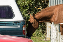 20180314_5126_7D2-200 Checking out the other horsepower (073/365)