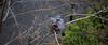 Bonjour ! De retour au bercail, il caille ! (Loanne ou Lolo) Tags: pigeons oiseaux nid bird birds