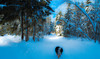 Enchanted forest (evakongshavn) Tags: winter winterwonderland winterwald winterlandscape snow hivernal hiver landscapephotography landscape landschaft paysage natur nature green new light white blue 7dwf