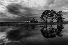 Strange weather forecasts (Pieter ( PPoot )) Tags: bw weather bad trees reflection