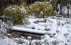 Spring ??? (AnyMotion) Tags: snow schnee pond teich cold kalt winter nature natur 2018 garden garten frankfurt anymotion 6d canoneos6d hiver invierno