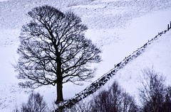 Tree on a hill by a wall (rustyruth1959) Tags: nikon nikond5600 tamron16300mm uk england yorkshire calderdale ripponden ryburnvalley home landscape snow tree branches treetrunk wall snowdrifts drystonewall field valleyside slope