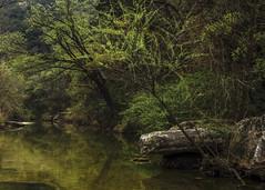 St. Patrick's Day Present (keith_shuley) Tags: spring green saintpatricksday stream creek bullcreek austin texas texashillcountry