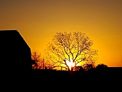 Good Morning ! (lillypotpie) Tags: sunrise oklahoma tree barn spring morning