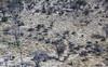 Suchen und finden (Zoom58.9) Tags: tiere elefanten griraffen springböcke zebras bäume gräser büsche wildtiere herde delta okavango botswana okavangodelta grün luftaufnahme safari flugsafari animals elephants giraffes sprinboks trees grasses shrubbery wildlife herd afrika green arialview airsafari canon eos 50d suchbild searchpicture