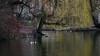 Spot the great crested grebes (PChamaeleoMH) Tags: birds centrallondon fauna greatcrestedgrebe london stjamesspark