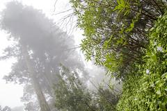 Perdu dans les nuages (artnow2940) Tags: lisbonne portugal sintra nuage clouds pena arbre tree nature wood naturegreen vert