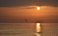 SERENITA' (Salvatore Lo Faro) Tags: natura nature mare sole onda riflessi raggio rosso gabbiano nuvole rodi lidodelsole puglia italia italy salvatore lofaro nikon 7200