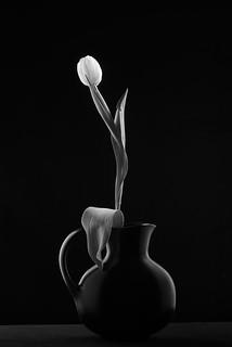 Black Vase With Tulip #5
