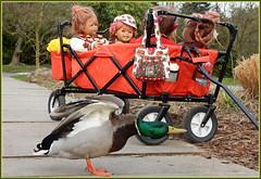 Achtung  fertig los ................... auf ins Wochenende ... (Kindergartenkinder) Tags: grugapark essen ente wasservogel kindergartenkinder