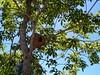 Ninho de João de Barro (imteix) Tags: fantasticnature nature natureza naturaleza nido ninho joãodebarro barreiro natureshot bird brazil brasil americadosul southamerica suldobrasil riograndedosul ufsm santamariars
