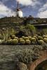 Jardin de Cactus (timhughes8) Tags: cacti cactus cesarmanriques d850 guatiza jardindecactus lanzarote nikon2470mm roferas