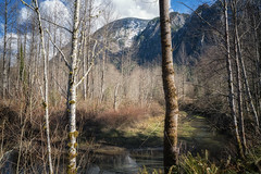 Mountain View (writing with light 2422 (Not Pro)) Tags: mountainview mountsi trees river washingtonstate landscape richborder sonya7
