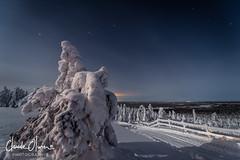 Frozen Nature (Claude-Olivier Marti) Tags: luosto laponie laponiefinlandaise landscape lapland finnishlapland finlande finnish hiver winter snow snowlandscape d850 nikond850 nuit nightshot longexposure