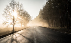 Infinity (--Conrad-N--) Tags: flickr friends meeting march 2018 winter reflection road street beams light shadow silhouettes sunrise golden morning forest za zeiss