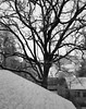 """""""Like all magnificent things, it's very simple."""" ―Natalie Babbitt ❄️ 🌳 ❄️ (anokarina) Tags: highlands louisville kentucky ky appleiphonese noir bw blackwhite grey grayscale window screen snow winter storm rooftops tree branches"""