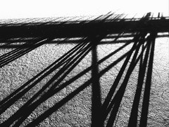 #iPhone #iphoneography #phoneography #bnw #blackandwhite #streetphotography #abstract #abstractphotography #contrast #shadow #bordwalk #beach #bnwabstract (Alex A Frost) Tags: iphone iphoneography phoneography bnw blackandwhite streetphotography abstract abstractphotography contrast shadow bordwalk beach bnwabstract