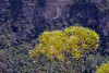 Blue Mountains Foliage 1 (BrianRope) Tags: bluemountains echopoint katoomba leura threesisters rope nsw australia
