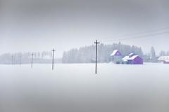 snowing (TeRo.A) Tags: snowing lumisade maaseutu countryside rural powerline sähkölinja maisema landscape