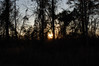 Sunlight Fading. (dccradio) Tags: lumberton nc northcarolina robesoncounty outdoors outside nature natural eveninglateafternoon sky bluesky eveningsky dusk settingsun setting sunshine sunlight sunset silhouette wooded woods forest backyard