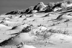 "Dune <a style=""margin-left:10px; font-size:0.8em;"" href=""http://www.flickr.com/photos/143579692@N02/39069881590/"" target=""_blank"">@flickr</a>"
