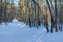 2018-03-19-08-16-32-7D2_3944 (tsup_tuck) Tags: 2018 march moscow spring woods