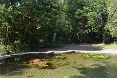 Game of Thrones -- Drehort -- Filming Location : Trsteno Arboretum (bd4yg) Tags: gameofthrones kroatien croatia drehort drehorte filminglocation trsteno arboretum