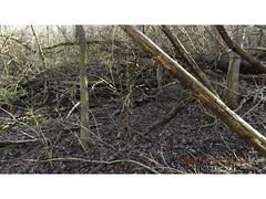 DSCF0913 (kevinredden1) Tags: hikes streambed hidden