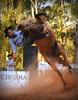 Braccini e Minissaia do Salso (Eduardo Amorim) Tags: gaúcho gaúchos gaucho gauchos cavalos caballos horses chevaux cavalli pferde caballo horse cheval cavallo pferd pampa campanha fronteira quaraí riograndedosul brésil brasil sudamérica südamerika suramérica américadosul southamerica amériquedusud americameridionale américadelsur americadelsud cavalo 馬 حصان 马 лошадь ঘোড়া 말 סוס ม้า häst hest hevonen άλογο brazil eduardoamorim gineteada jineteada