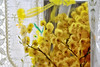 Felice 8 marzo! (STE) Tags: mimosa mimose fiore flower flowers happy felice 8 marzo march woman women womens day giorno festa gialli giallo yellow tamron90 macro acacia dealbata silver tende tenda