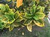 belles-feuilles© (alexandrarougeron) Tags: thailande thailand souvenir fleurs vacances ambiance paysage asie