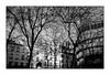 Paris (Punkrocker*) Tags: leica m5 summicron asph 35mm 352 film ilford pan 400 nb bwfp street city light urban paris france tree