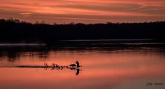 Early morning departure (flintframer) Tags: daybreak indiana canadian geese flight muscatatuck nwr nature wildlife birds dattilo wow america usa canon eos 7d markii tamron 18400mm