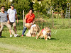 CoursingVillaverla2016w-047 (Jessica Sola - Overlook) Tags: dogs sighthounds afghanhounds greyhounds saluki barzoi italiangreyhounds irishwolfhounds lurecoursing lure race run dograces field greengrass