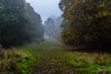 A walk in the forest (PhredKH) Tags: canonphotography eppingforest fog forest fredkh grass mist photosbyphredkh phredkh splendid trees outdoor outdoorphotography sky kitlens pathway essex