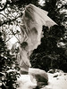 Wraith (Feldore) Tags: belfast spooky ghost ghostly wraith plastic covering sinister botanic gardens sepia shroud strange feldore mchugh em1 olympus 1240mm