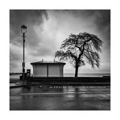 Sheltered (richieJ 11) Tags: llandudno wales seaside coast wet rain tree shelter road lamppost disabled parking shadows mono blackandwhite