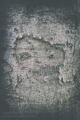 Dunkelheit 123 (Myrkwood666) Tags: myrkwood666 tree baum boom wood forest wald bos zwartwit blackandwhite schwarzweiss monochrome bw sw donker dunkel duister dark finster dunkelheit