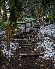 Steps to Leith Hill Tower (ed027) Tags: ifttt 500px woods boardwalk footpath hartsop tree trunk shinkyo bridge crawford notch forest foret de paimpont azusa river park snow cold winter steps woodland spring colour springtime hill mountain mud wood wooden path line lines up shadow