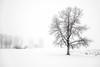 foggy Morning 2 (mikefromsundre) Tags: fog alberta canada tree snow minimalism monochrome winter white