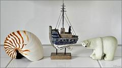 Nautilus , Kutter & Eisbär (h.bresser) Tags: nautilus kutter badezimmer deko hbresser hartmutbresser stillleben stilllife eisbär polarbear