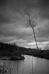 DSC02129 (Distagon12) Tags: nature landscape landshaft paysage mélancolique hiver marais lac lake noiretblanc blackwhite blackandwhite