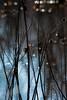 spirit pond (courtney065) Tags: nikond200 nature landscapes pondscapes pond wetland marshland foliage branchlets bokeh blurred depthoffield blue glow spirits woodland reflections waterreflections painterly serenitynow sparkle