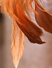 sacred feathers (Kens images) Tags: feathers sacred traditional historic texture colours canon kanata ontario cree