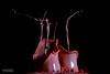 Rote Audiotropfen (Picturehunters) Tags: audio tropfen test splash blitz arduino spielerei rotefarbe spritzer rot farbig farbe bunt