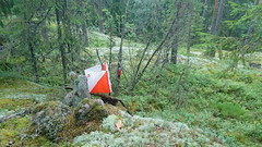 An orienteering control point in the Nuuksio national park (Vihti, 20170813) (RainoL) Tags: crainolampinen 2017 201708 20170813 august boundarymark controlpoint finland firmaliiga forest geo:lat=6032326148 geo:lon=2449631453 geotagged nationalpark nouxnationalpark nuuksionationalpark nuuksionkansallispuisto nyland orienteering orientering rasti rastilippu summer suunnistus uusimaa vichtis vihti fin kuntosuunnistus